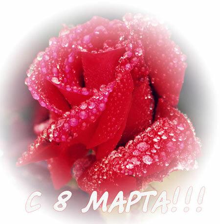 С 8 марта ! Роза в каплях росы открытка поздравление картинка