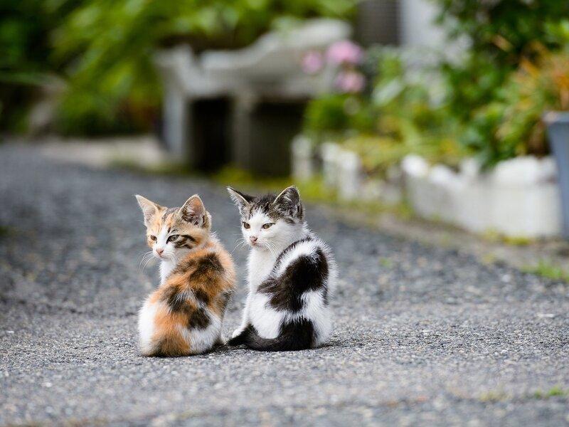 Обои на рабочий стол кошки