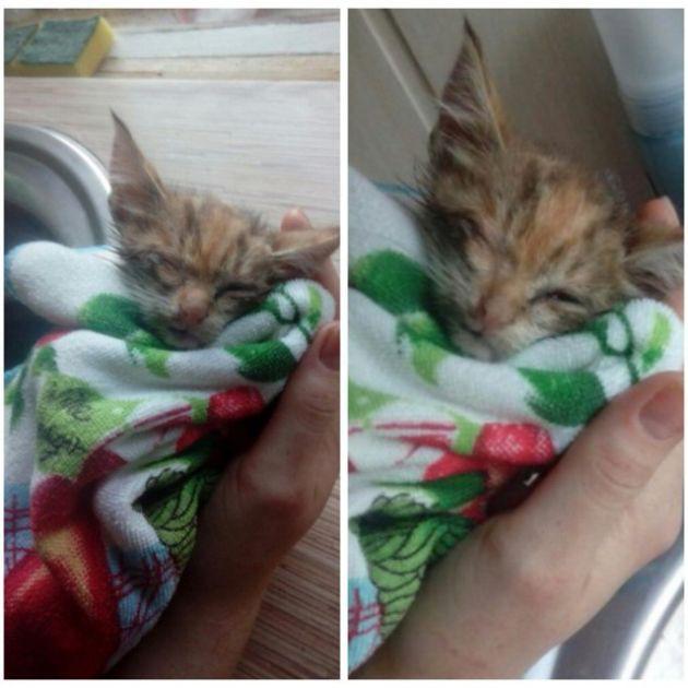 история спасения одного котенка