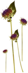 Flowers4-GI_DarknessSparkles.png