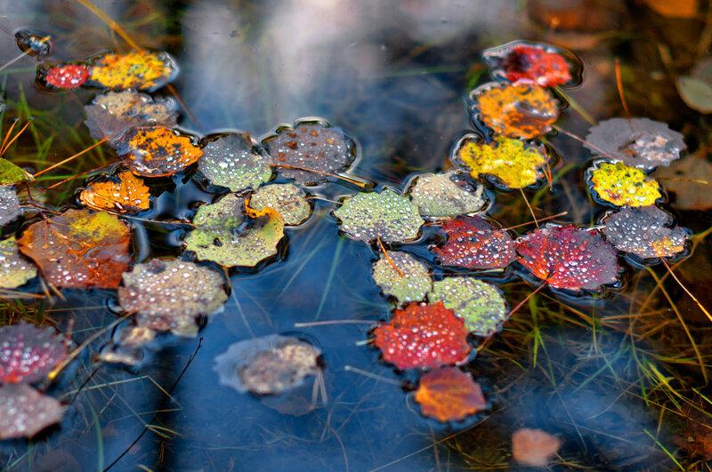 Осенняя Карелия