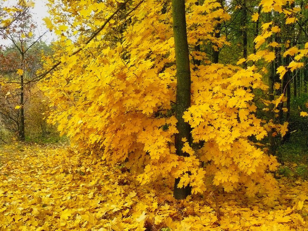 Осень с велосипеда
