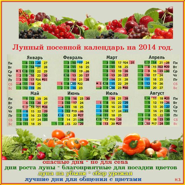 Диета института питания 7 кг 14 дней Отзывы