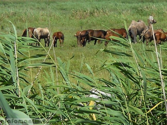 Верблюд в степи