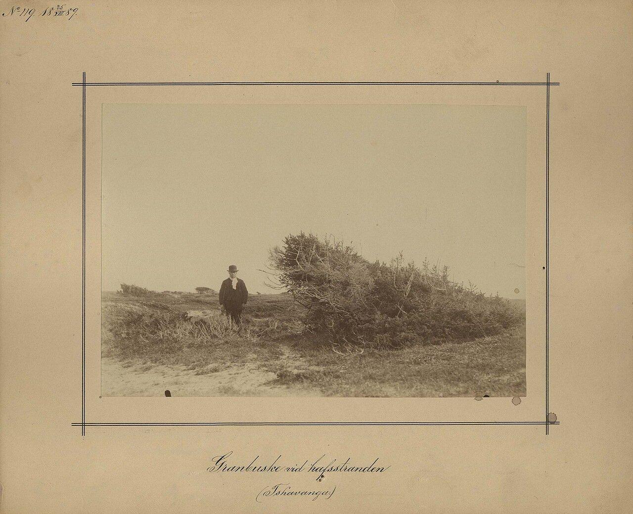 24.8.1889.Чаваньга. Кусты вдоль берега
