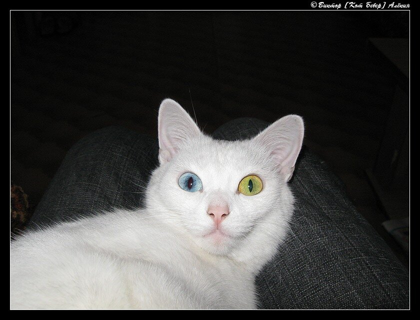 """""""Твои глаза - сапфир и изумруд..."""" 2009"""