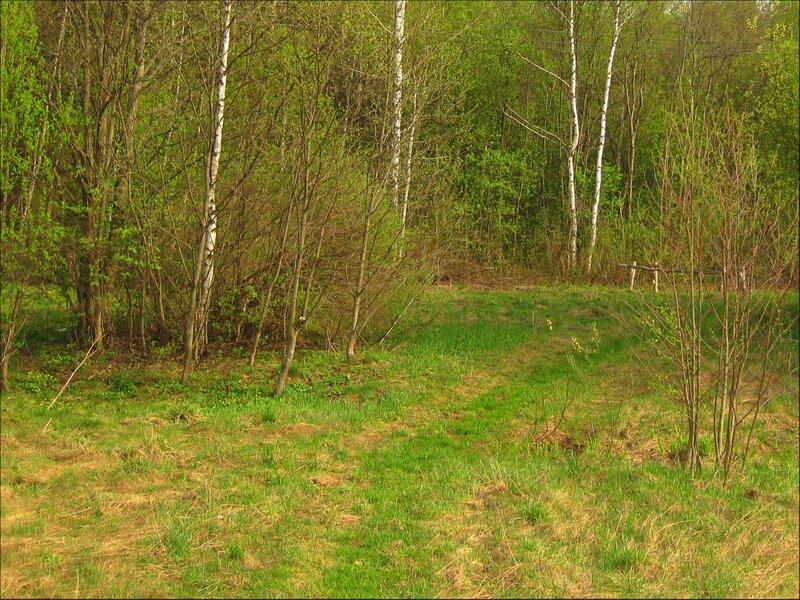В майском лесу много клещей