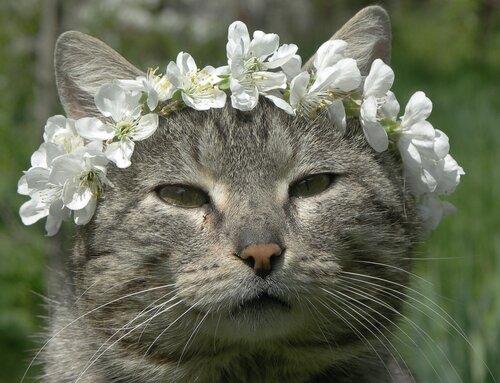 принц кошачьего царства