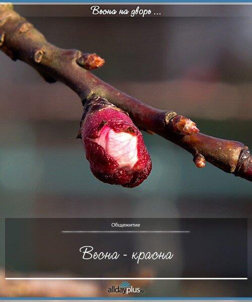 Весенние цветы 03