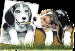 Собаки  0_57c85_cbac08a6_S