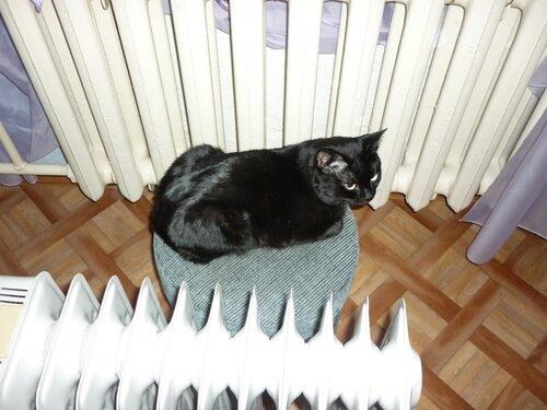 Ничто кота так не согреет, как с двух сторон - по батарее!
