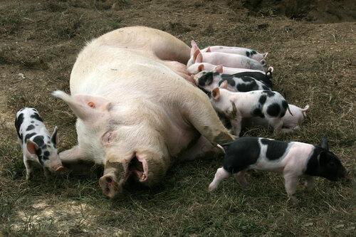 Россельхознадзор ввел запрет на ввоз и транзит молдавского мяса