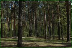 http://img-fotki.yandex.ru/get/50061/15842935.2ed/0_e3bd0_e70b4699_orig.png