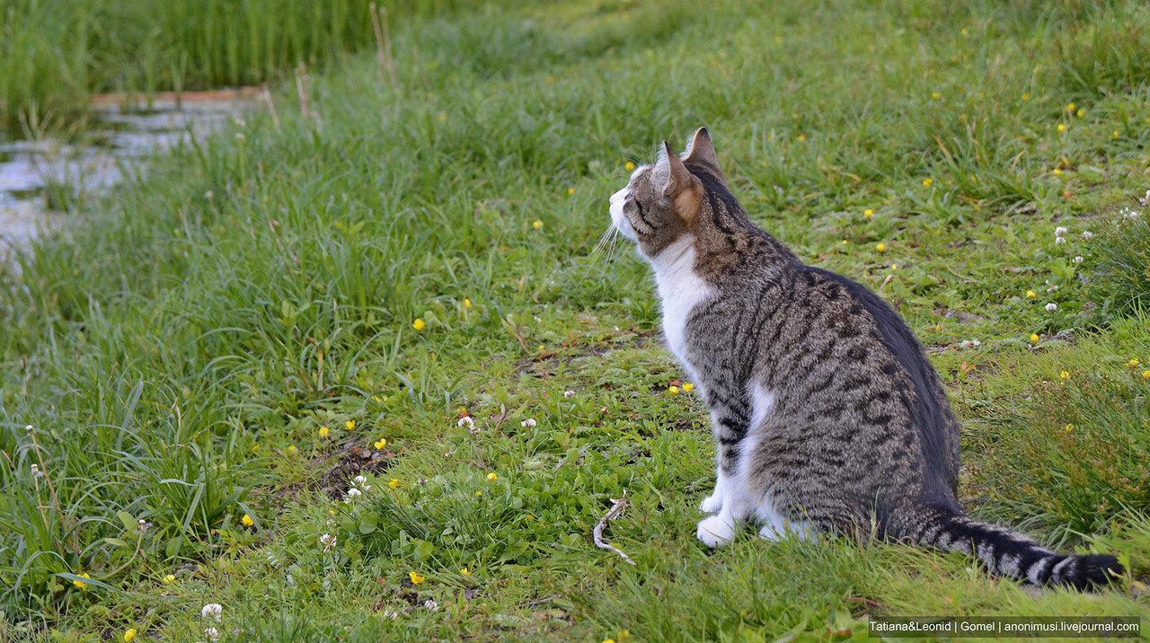 Кошка с 5-го