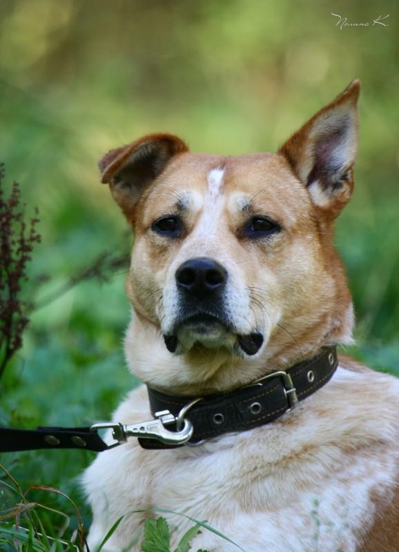 Чижик собака из приюта догпорт