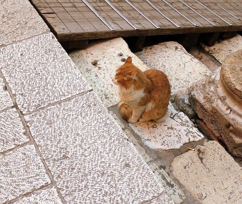 Иерусалимкий котик