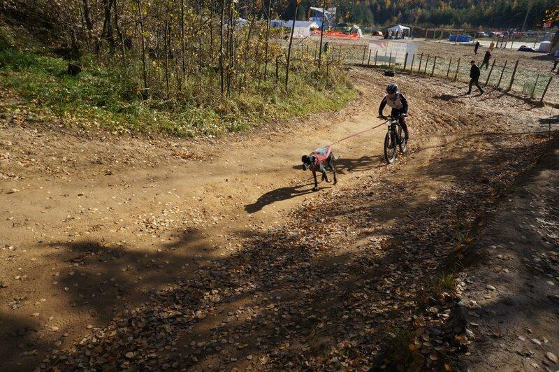 Собачьи бега, Лыткарино, карьер