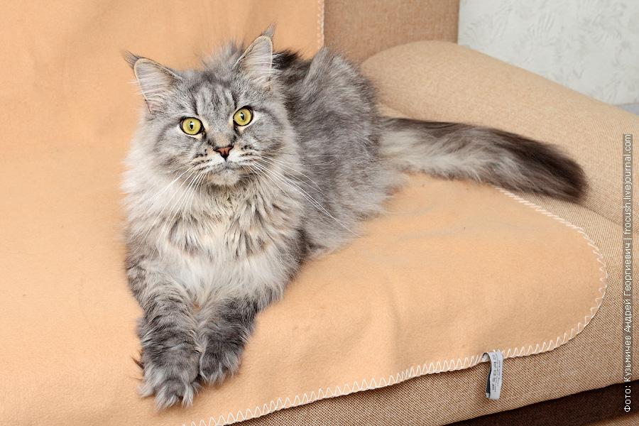 кошка мйен кун