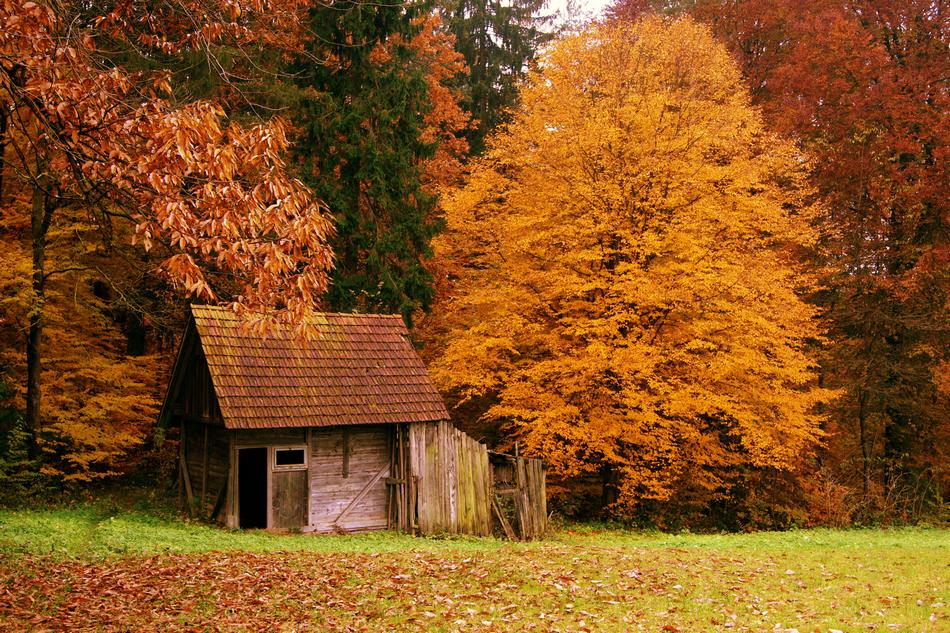Most Beautiful Forest Houses