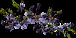 NLD Freebie Flowers.png