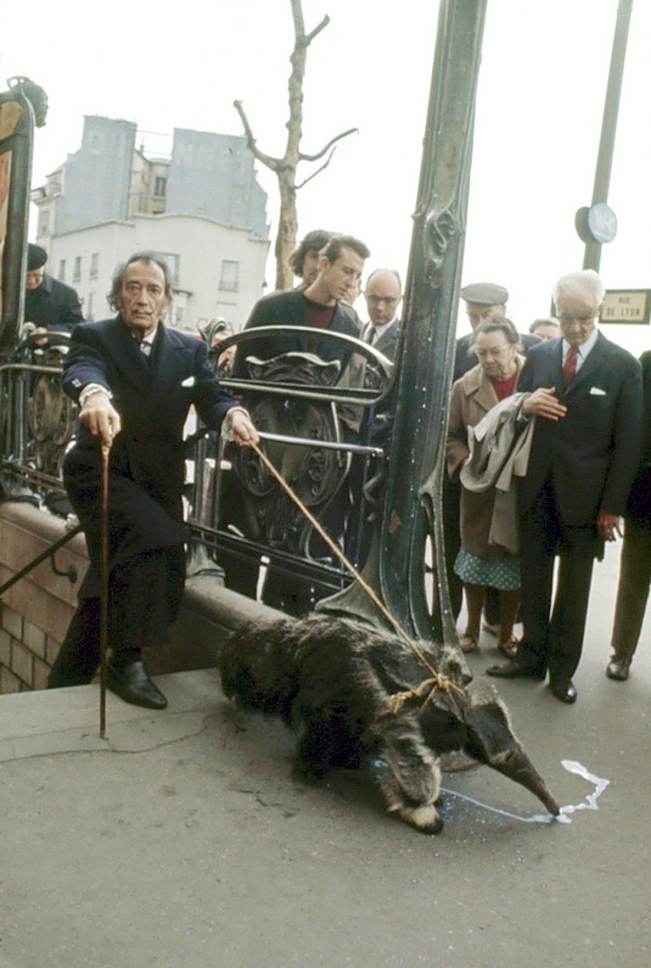 Кто-то выводит на прогулку собаку, а вот знаменитого художника Сальвадора Дали нередко можно было вс