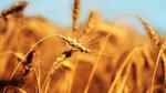 Gold nature (43).jpg