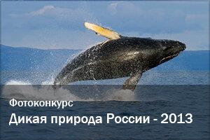 Фотоконкурсы | Дикая природа России - 2013