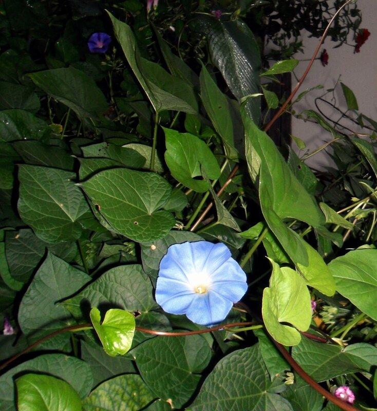 Сентябрьский цветок