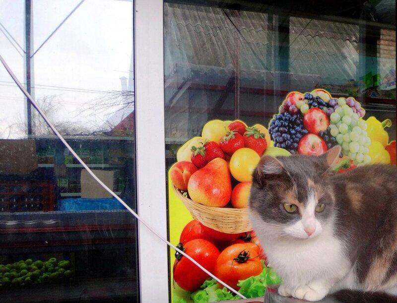 Фото с котом ... DSC03697 - 01.JPG