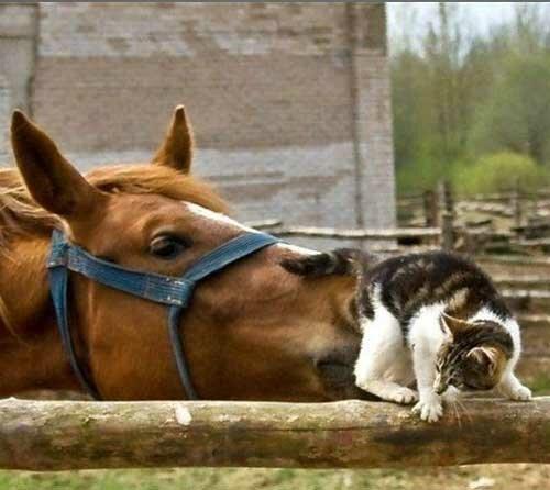 Коты и другие животные