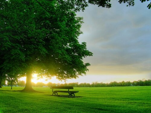 sun скамейка дерево