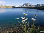 Ромашки на фоне гор[1]. Кавказ