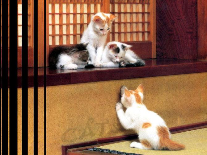 кошки - котята играют