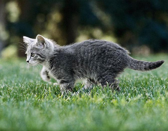 кошки-охотники
