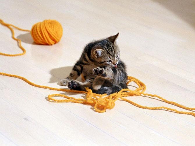 кошки - облизывает себя