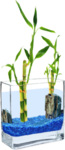 PLANT 3.png