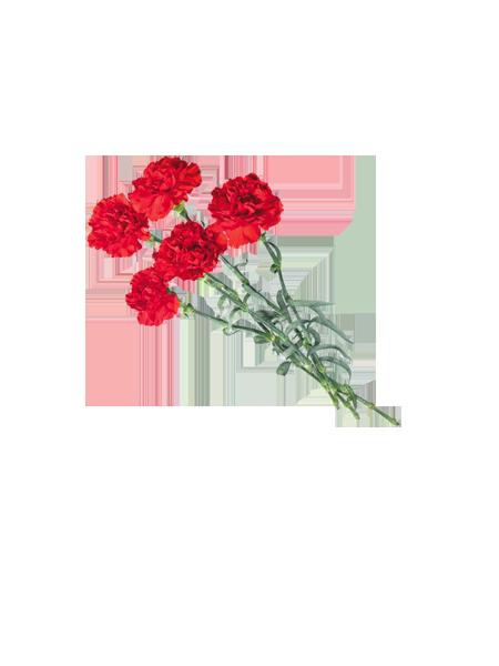 луговых картинки цветы на белом фоне анимации 23 февраля это тем