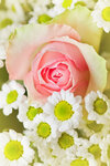 Bouquet of  pink roses 02.jpg