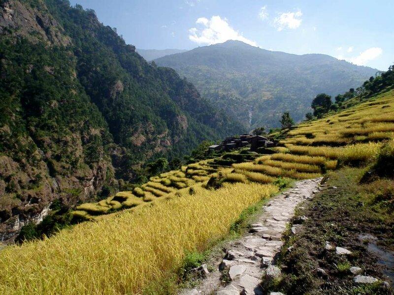 Рисовые поля в Лапубеси.