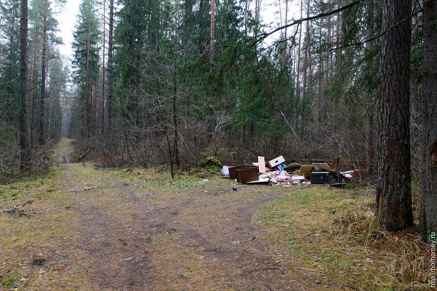 куча мусора в саровском лесу