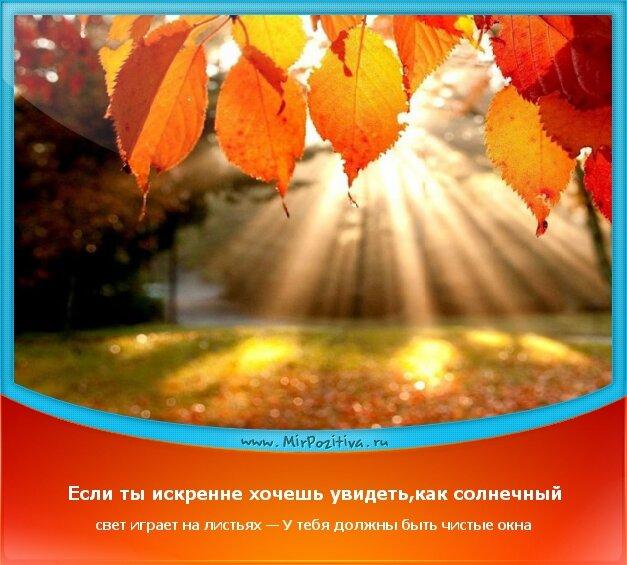 позитивчик дня: Если ты искренне хочешь увидеть,как солнечный свет играет на листьях — У тебя должны быть чистые окна