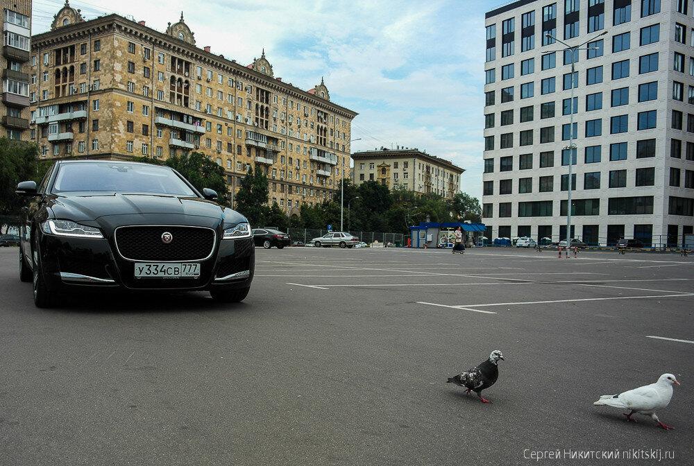 Британская бизнес-кошка Jaguar XF