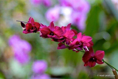 цветы, лоро парк