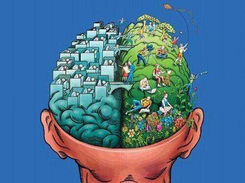 мозг, правое полушарие, левое полушарие