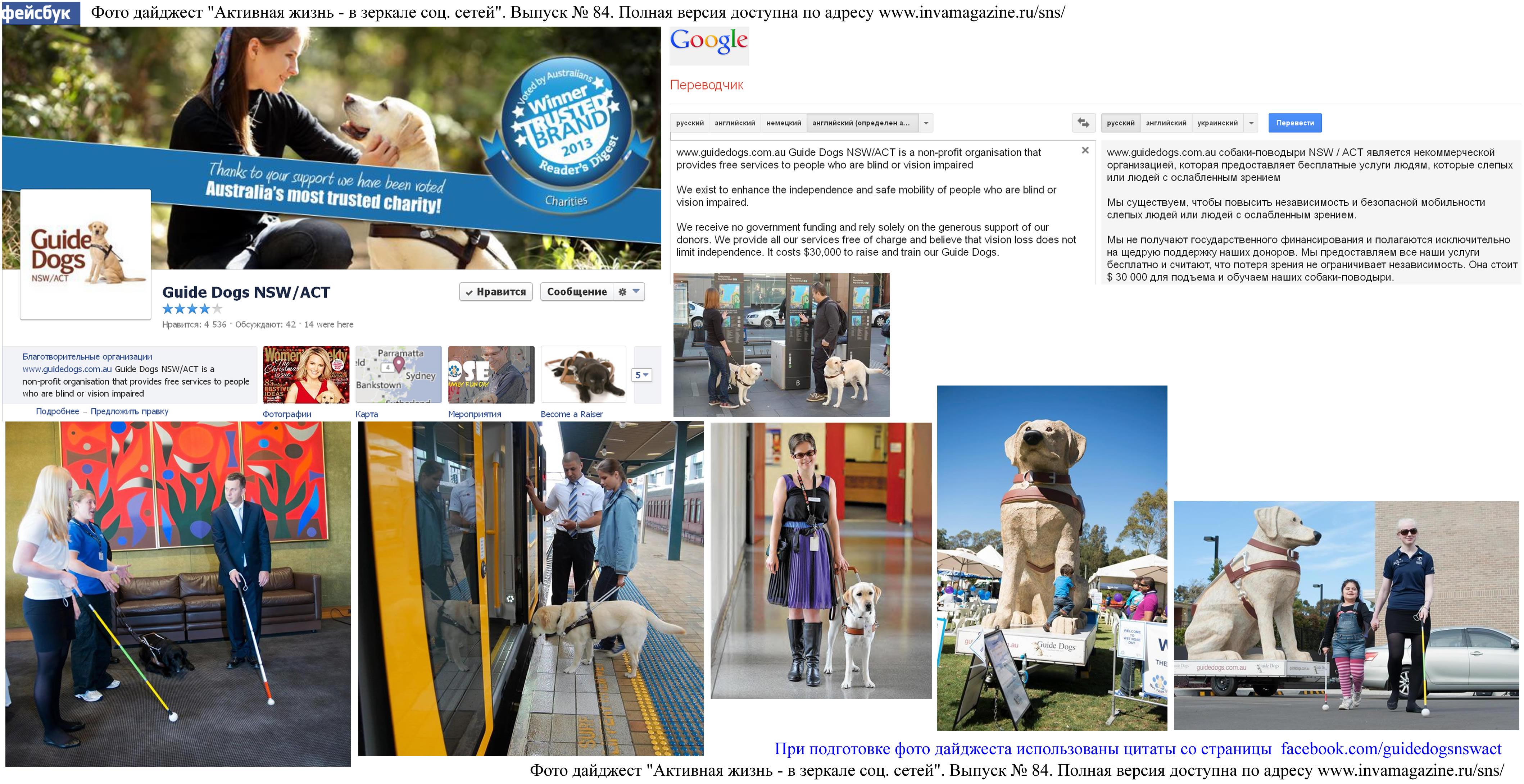 Фото дайджест страницы Guide Dogs NSW/ACT