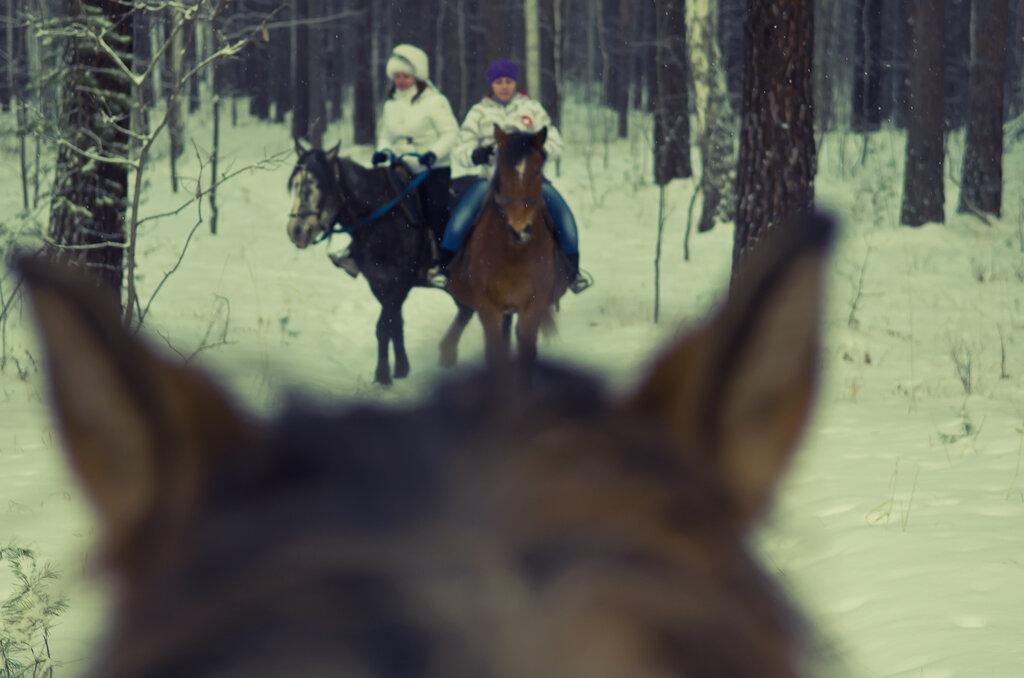 4. Прогулки на лошадях в лесу близ деревни Верхняя Сысерть