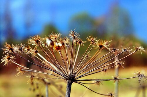 Прошлогодний цветок