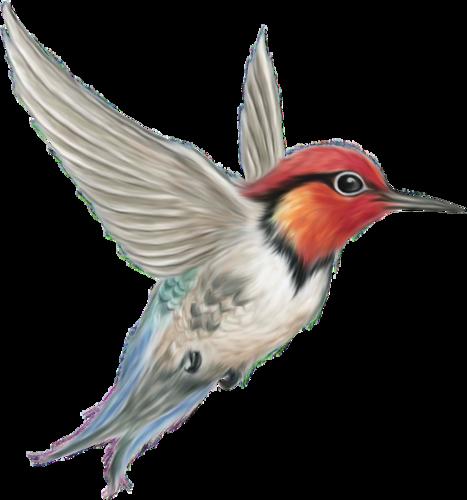 Ptice..... 0_7d779_a5e57f18_L