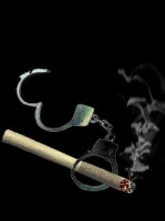 Silk Cut cigarette in pennsylvania