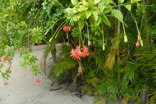 Это цветёт зимой в Гондурасе.